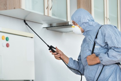 Ant Infestation, Pest Control in Lower Edmonton, N9. Call Now 020 8166 9746